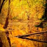 Herbstlicht3-7