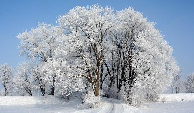 Winter14-1502