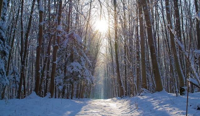 Winter14-1503