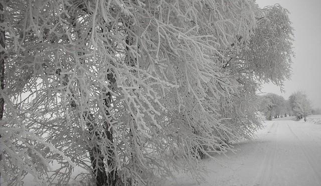 Winter14-1504