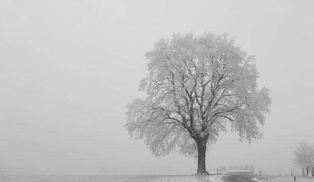 Winter14-1506