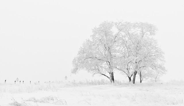 Winter14-1508