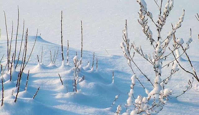 Winter14-1510
