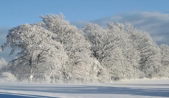Winter14-1511