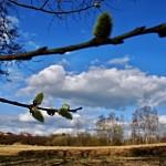 spring-110722_640